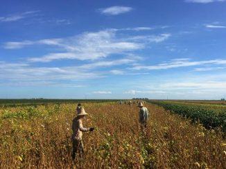 Brazil rides soybean sales China U.S. trade war